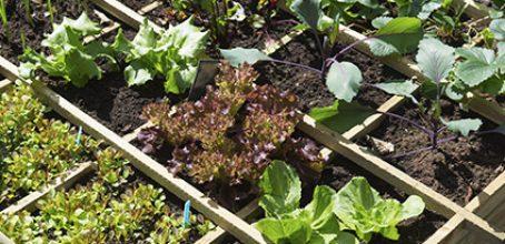 Abonado y fertilización en agricultura ecológica