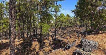 Formación gratuita en Actividades auxiliares en conservación y mejora de montes