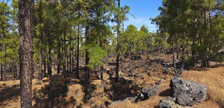 Actividades auxiliares en conservación y mejora de montes