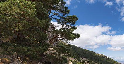 Formación gratuita en Aprovechamientos forestales