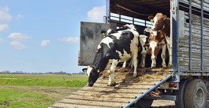 Formación gratuita en bienestar-animal-en-el-transporte-de-animales-vivos