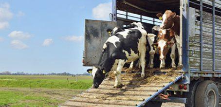 Curso de Bienestar animal en el transporte de animales vivos en Ibecon – Parla
