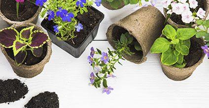 Formación gratuita en Complemento y actualización de usuario profesional productos fitosanitarios: nivel cualificado