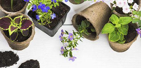 Complemento y actualización de usuario profesional productos fitosanitarios: nivel cualificado