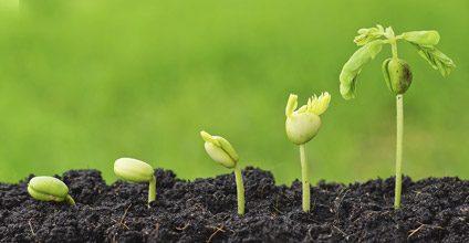Formación gratuita en Explotaciones agrarias en agricultura ecológica