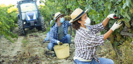 Curso de Nuevas formulaciones agroquímicas más respetuosas con el medioambiente en Ibecon – Parla